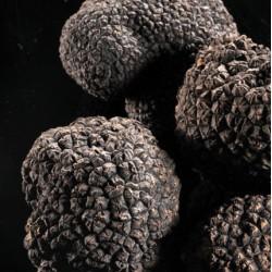 Truffes fraiches Melanosporum